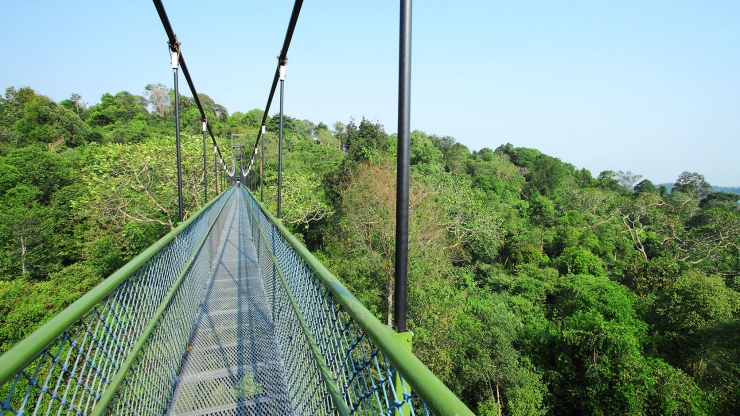 macritchie-treetop-walk-pilates-fitness