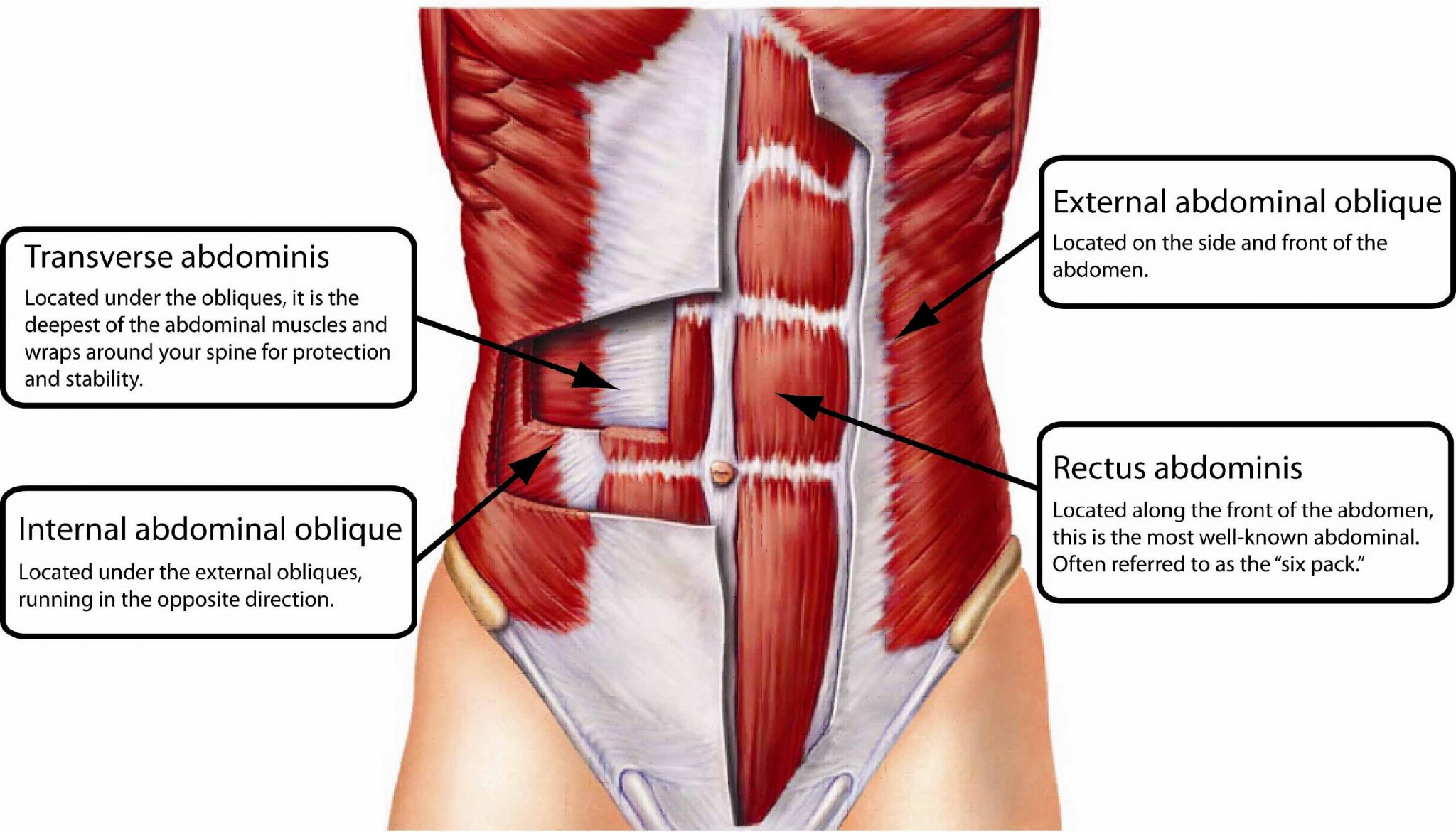 Why Is It Important To Have Strong Obliques